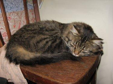 больной унылый кот спит на стуле