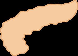 схематичное изображение поджелудочной железы